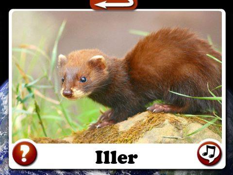 hur-later-djur-iller